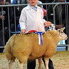 126 sheep young handler