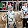 054 sheep young handlers