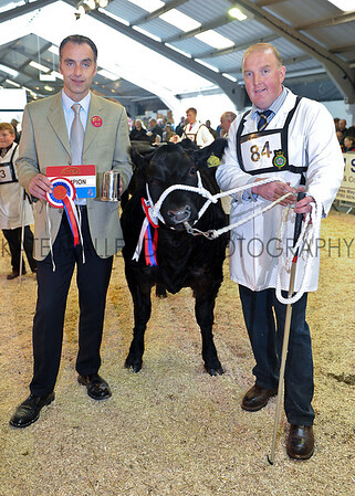 Champion heifer British Limousin Black Beauty owned by Tecwyn Jones of N Wales with Judge Hugh Dunlop