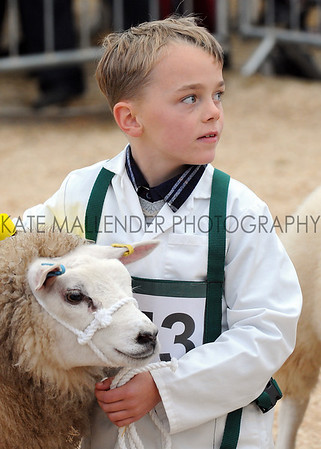 066 sheep young handler