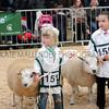 068 sheep young handler