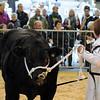 041 beef young handler
