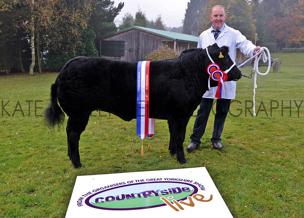 CSL 12 Supreme Champion British Limousin Black Beauty owned by Tecwyn Jones from North Wales