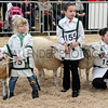 053 sheep young handlers
