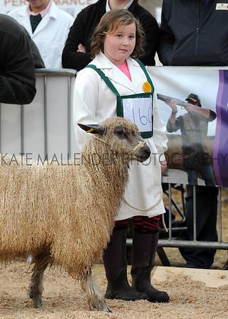 070 sheep young handler