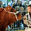 045 beef young handler