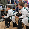 095 sheep young handlers