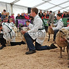 093 sheep young handlers
