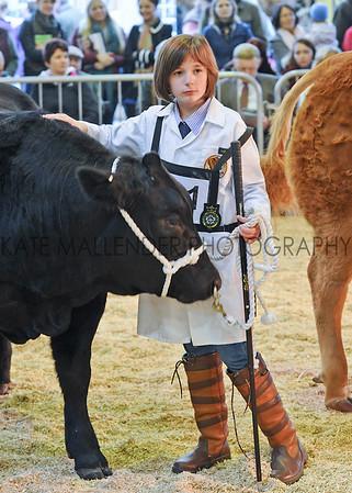047 beef young handler