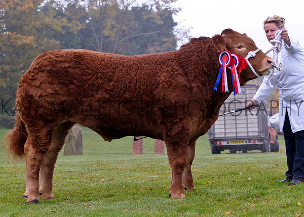 CSL 12 Reserve Supreme champ Charlotte Alford with No Likey No Lightly from Devon