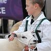 060 sheep young handlers