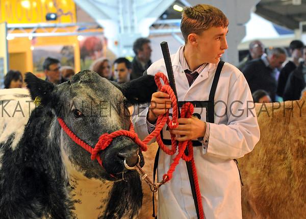 080 beef young handlers