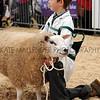 097 sheep young handlers