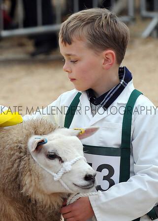 065 sheep young handler