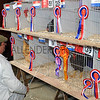 135 poultry judging
