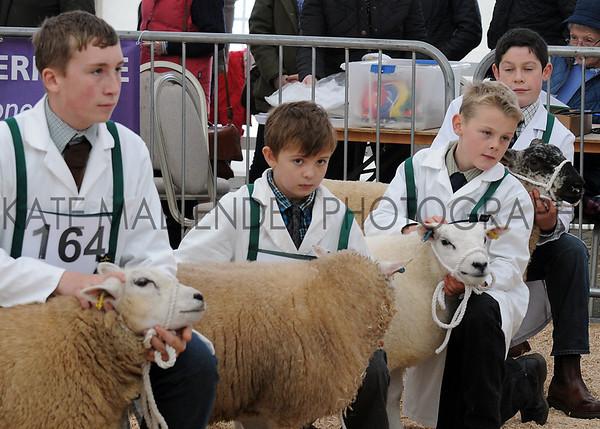 064 sheep young handerl