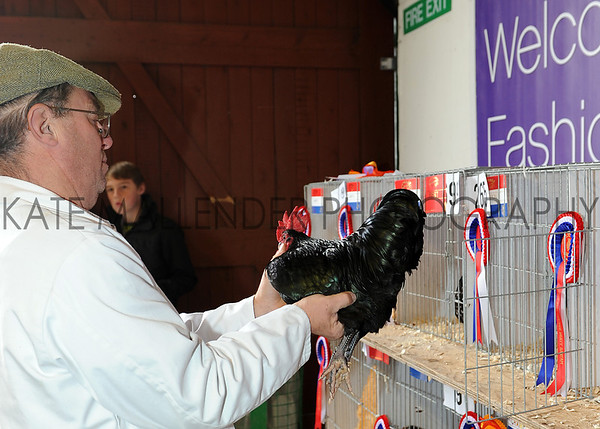 136 poultry judging