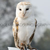 020 owl