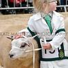 056 sheep young handler