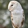 021 owl