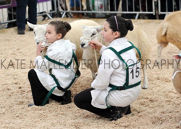 058 sheep young handlers