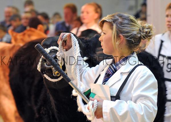 078 beef young handlers