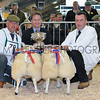 Champion pair of butchers lambs L-R David Wadland & Ian Lancaster presented by Nigel Pulling, YAS Chief Exec (centre)