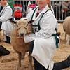 099 sheep young handlers