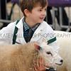 061 sheep young handler