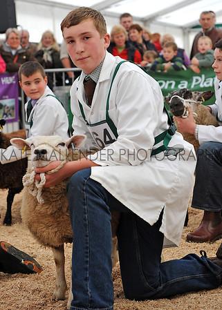 098 sheep young handlers