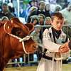 043 beef young handlers