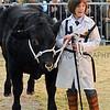 044 beef young handler