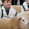 062 sheep young handler