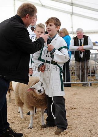 069 sheep young handler