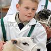 063 sheep young handler