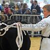 081 beef young handler