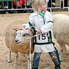 055 sheep young handler