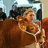 042 beef young handler