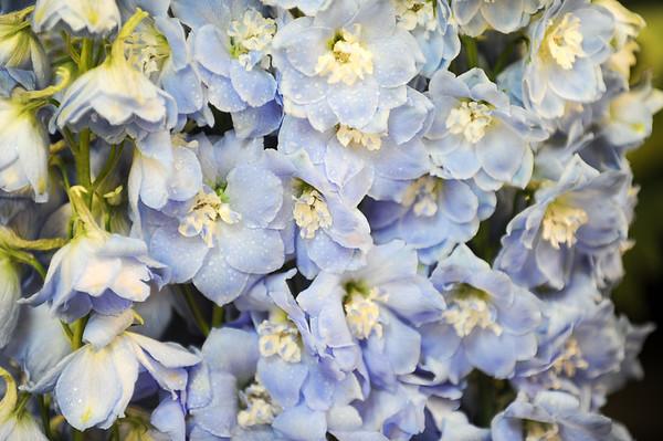 GYS 14 _100_flowers GVs