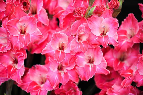 GYS 14 _108_flowers GVs