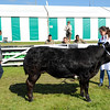 GYS 14 _030_beef young handlers