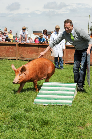 GYS 14 _128_One man & his pig