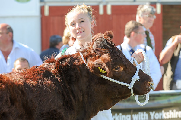 GYS 14 _032_beef young handlers