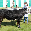 GYS 14 _031_beef young handlers