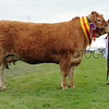 GYS 14 Supreme Beef Brockhurst Bolshoi owned by Doug Mash