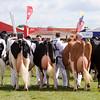 GYS 14_085_dairy GV