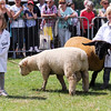 GYS 14_143_sheep young handlers