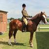 GYS 14_262_equine GV