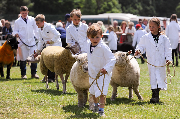 GYS 14_146_sheep young handlers