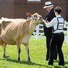 GYS 14_091_dairy GVs